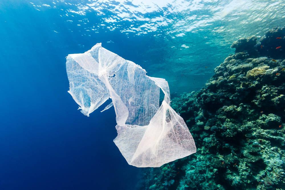 Dónde encontrar Bolsas de Plástico Biodegradables