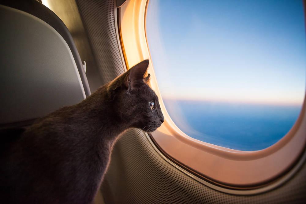 Ya puedes viajar con tus mascotas en avión