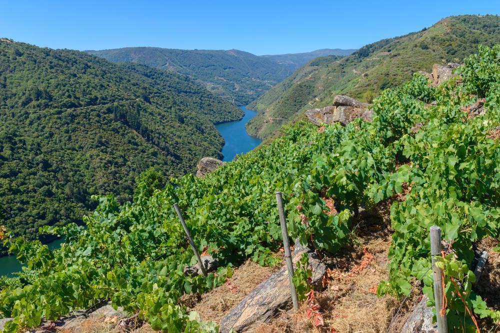 El vino, uno de los productos más destacados de nuestra alimentación