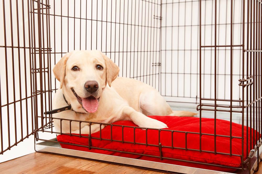 Condiciones que tiene que tener una buena residencia canina